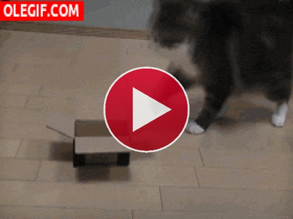 GIF: Para este gato el tamaño no importa