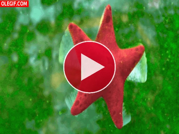 GIF: Esta estrella está sacando brillo al cristal