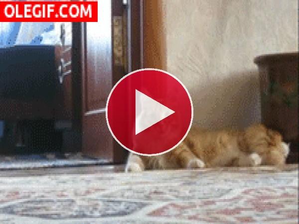 GIF: ¿De qué se asusta el gato?