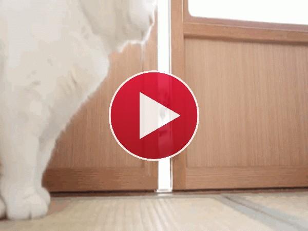 GIF: A este pobre gato no le dejan entrar