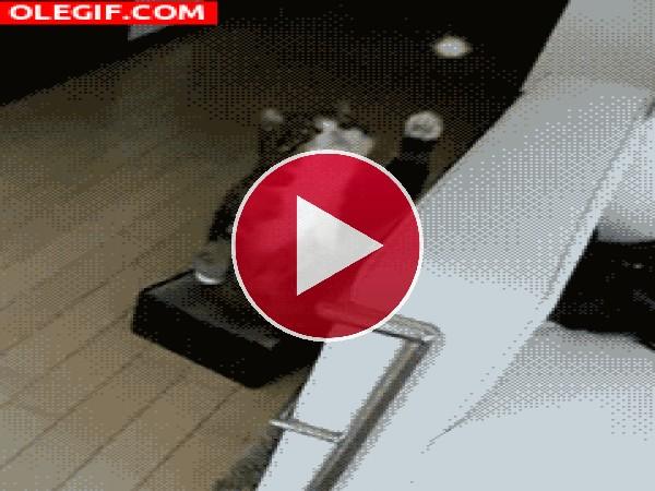 GIF: Este gato no puede mantener el equilibrio