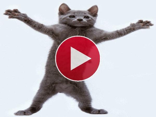 Parece que a este gato le gusta hacer aeróbic