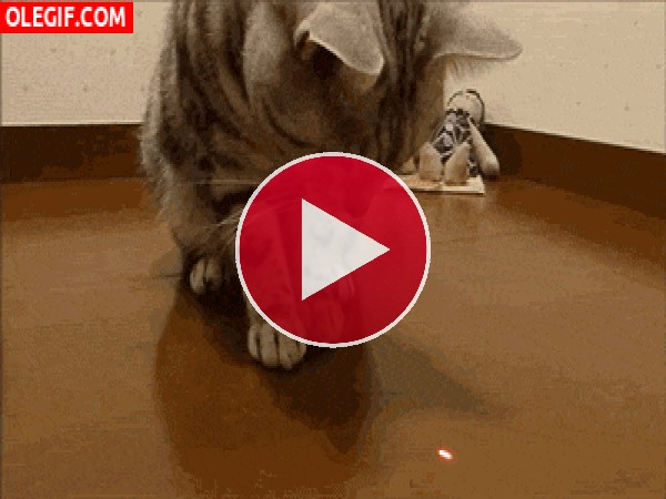 GIF: Este gato se come la luz láser