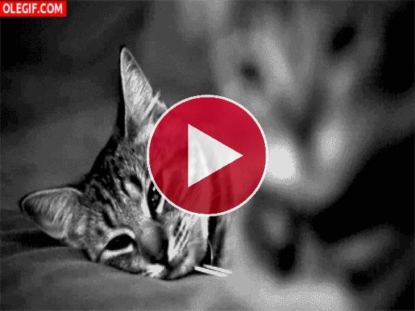 GIF: Las caras de dos lindos gatos