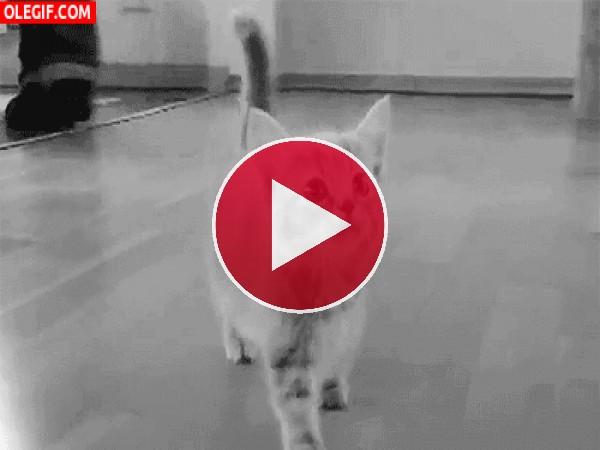 GIF: ¿Por qué maúlla este gatito?