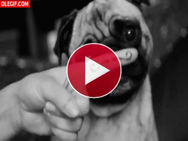 GIF: Este perro tiene un nuevo mostacho