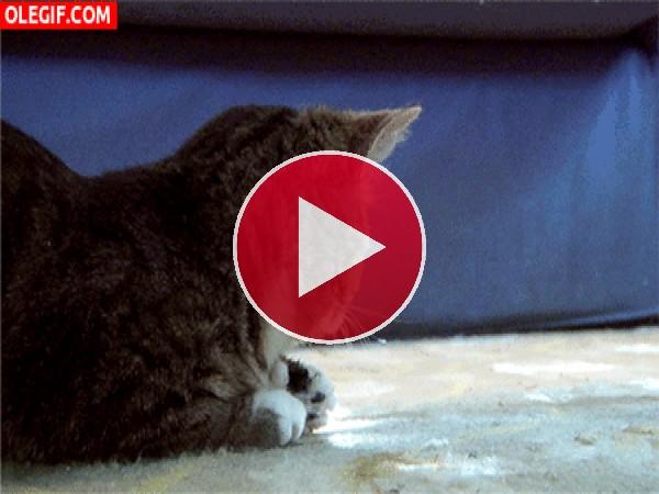 GIF: ¡Soy un gato!