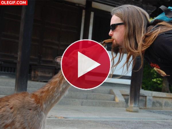 GIF: A este ciervo le gustan las galletas