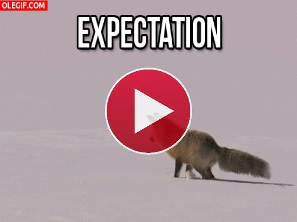 GIF: A este zorro le gusta esconderse en la nieve