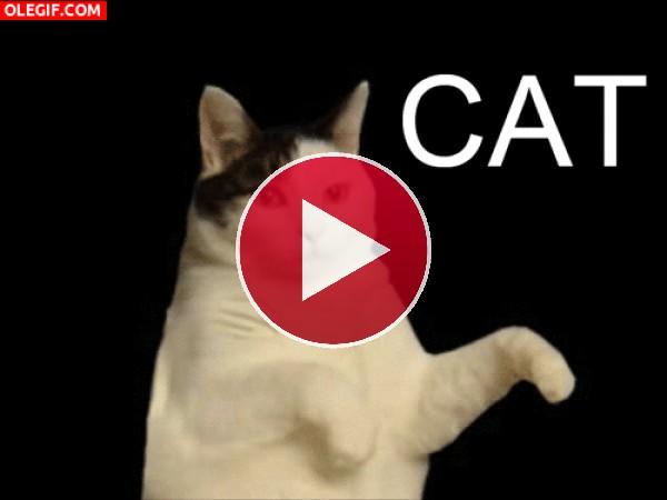 GIF: Un gato muy chistoso y bailarín