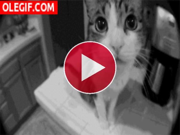 GIF: Hola soy un gato