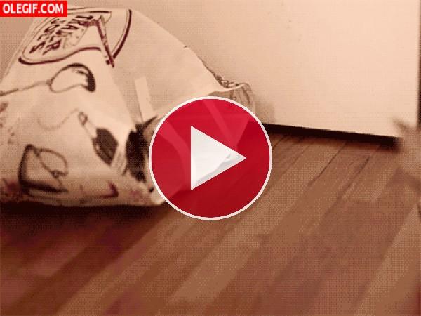 Un gato muy asustadizo