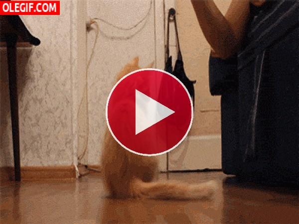 GIF: ¿Qué intenta atrapar este gato?