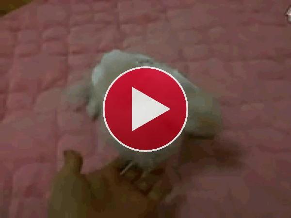 Cachorro chocando sus patitas