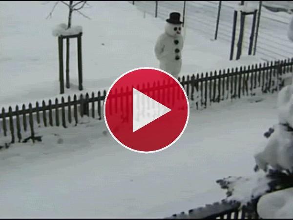 GIF: Ni se imagina quién le lanza la bola de nieve