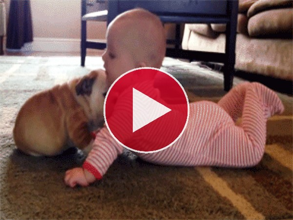GIF: Este cachorro no para de lamer al bebé