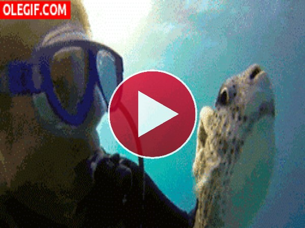 GIF: Acariciando a un pez globo