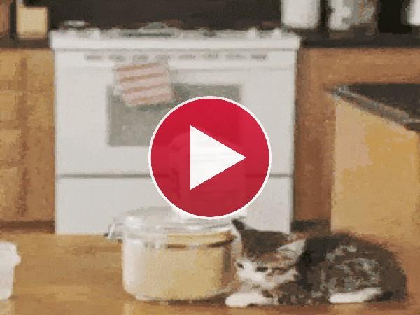 GIF: Gatitos preparándose el desayuno