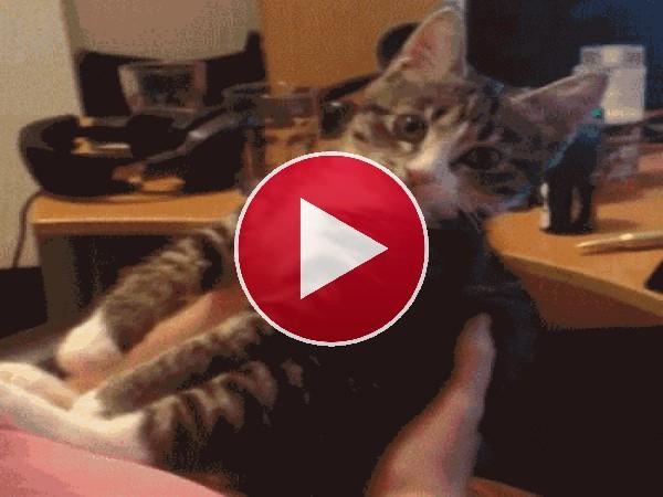 GIF: Este gato no quiere besos
