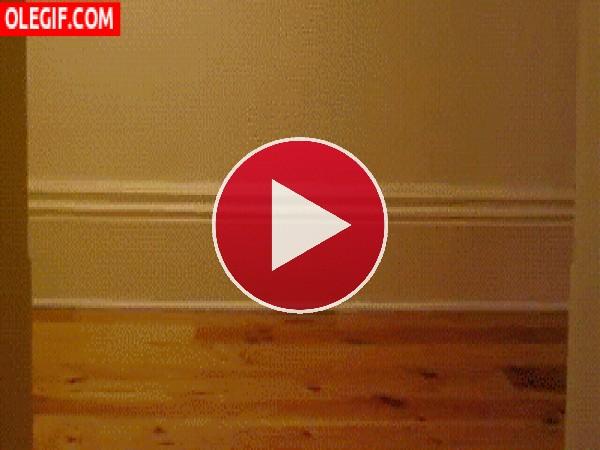 GIF: A este gato le chifla pasear en skate