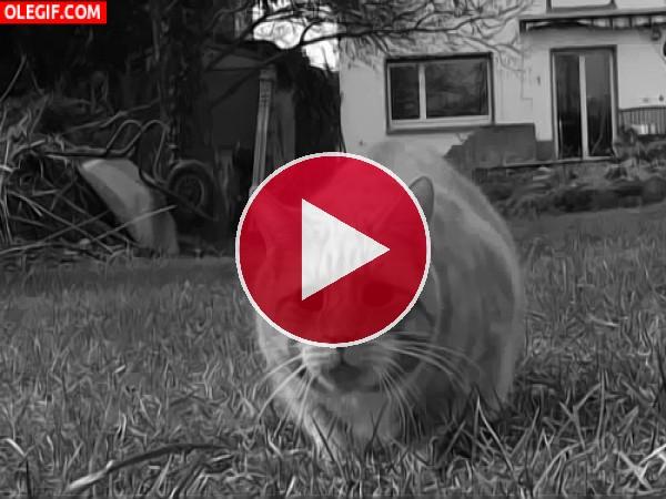 Gato tomando el fresco en el jardín