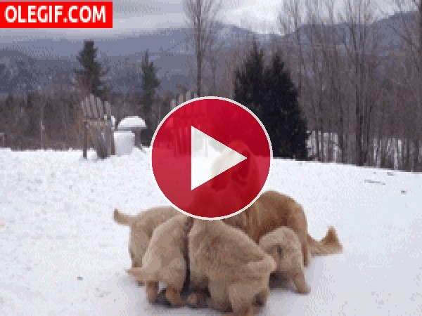 Mamá jugando con sus cachorros