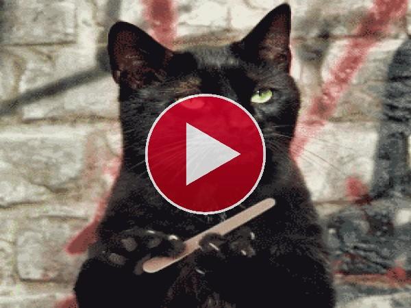 Qué bien se lima las uñas este gato