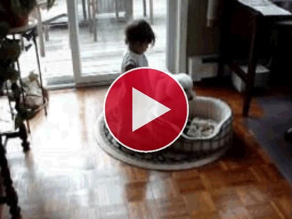 Al bebé le gusta la cama del perro