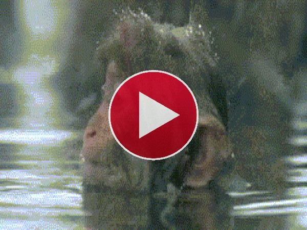 Macaco disfrutando de un baño bajo la nieve