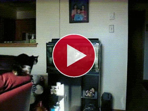 GIF: Este gato quería agarrar al pez
