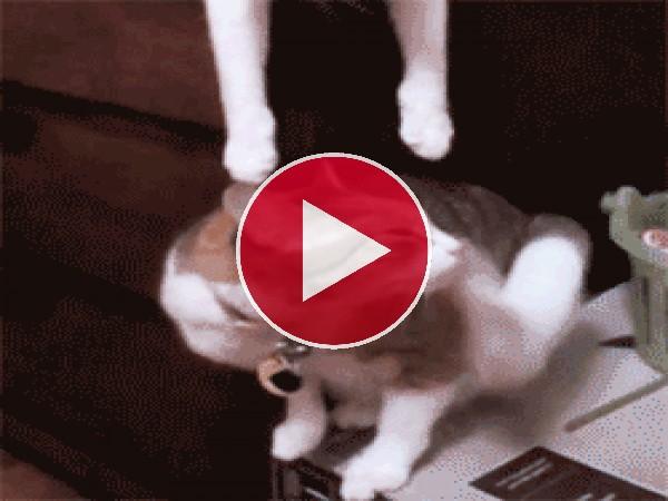 GIF: Un besito gatuno