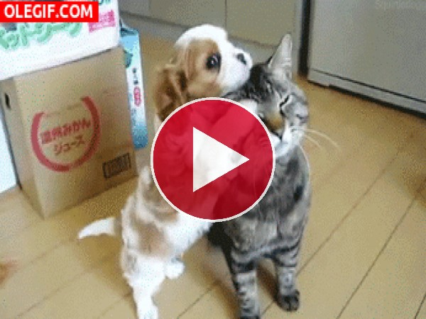 A este cachorro le gusta peinar al gato