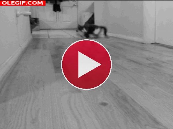 GIF: Gatito dando saltitos