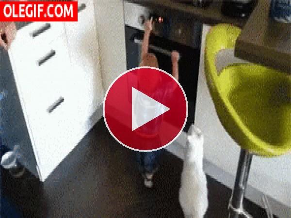Este gato enseña al bebé que el horno no se toca