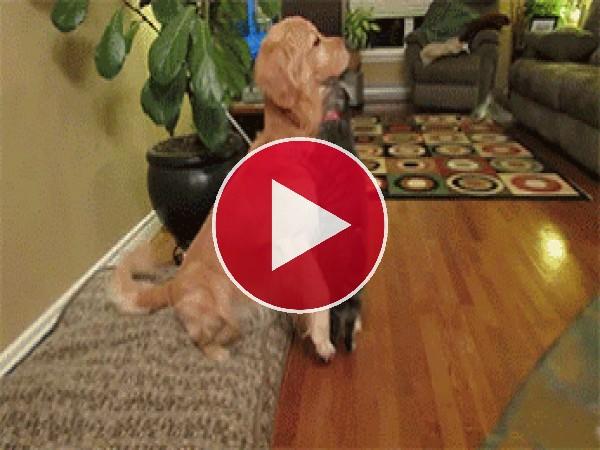 GIF: Amistad entre un gato y un perro