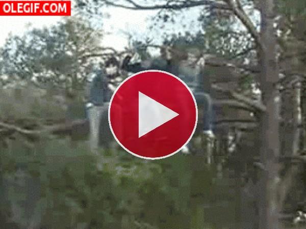GIF: Hay que ser tonto para cortar la rama del árbol
