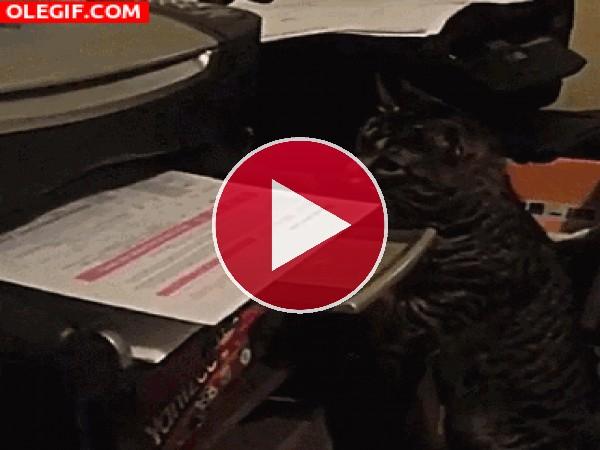 Este gato se vuelve loco con la hoja de la impresora