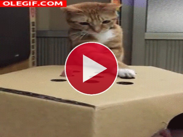 GIF: Menudo gato tan listo