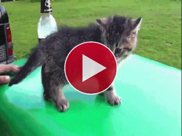 Este gatito pierde el equilibrio