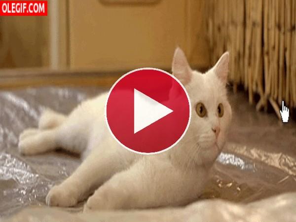 GIF: Gato siguiendo el puntero con la mirada