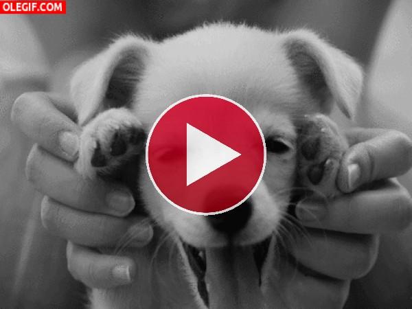 GIF: Un cachorro juguetón