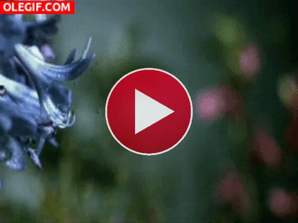 GIF: Una gran lengua cazando a una mantis