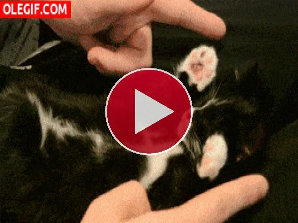 Jugando con mi tierno gatito
