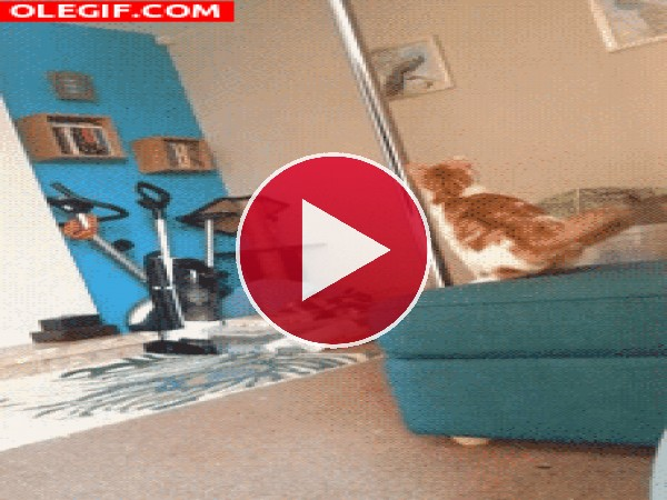 Este gato no logra subir por la barra