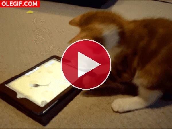 Mira cómo juega el gato con la tablet