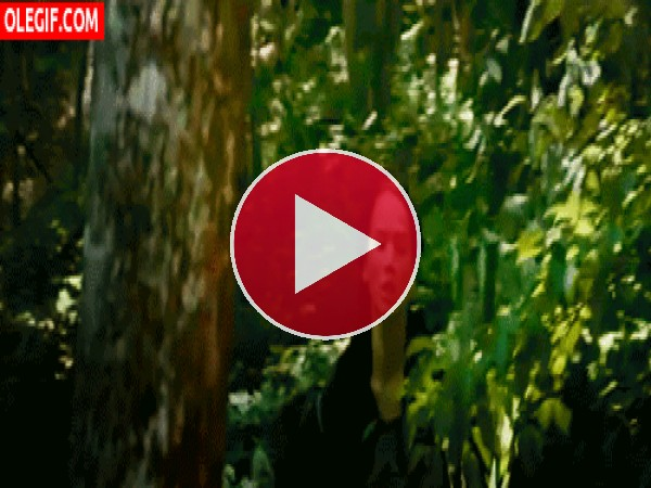 GIF: Katniss corre sin parar por el bosque