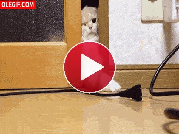 GIF: ¡No puedo entrar!