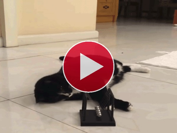 Mira a este gato jugando con el péndulo de Newton