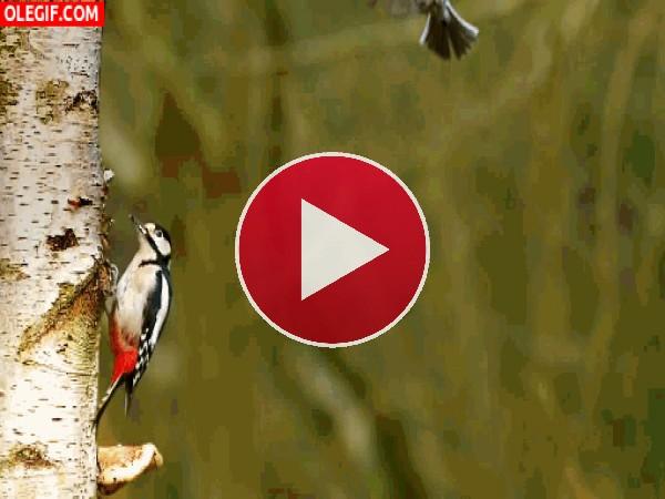 Este pájaro practica el bullet time en pleno vuelo