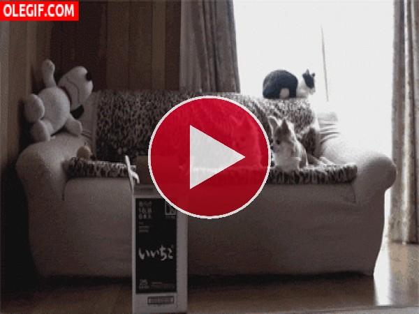 Estos perros observan la caída del gato